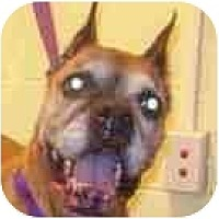 Adopt A Pet :: Rosie - Sunderland, MA