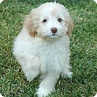Adopt A Pet :: Henry - La Habra Heights, CA