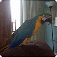 Adopt A Pet :: Cabo - Salt Lake City, UT