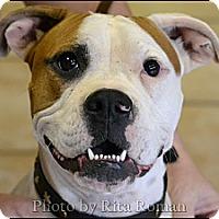 Adopt A Pet :: SUGAR - Higley, AZ