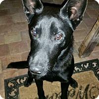 Adopt A Pet :: Jasper - Pompano Beach, FL