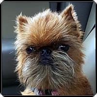 Adopt A Pet :: TUTTI TULIP - ADOPTION PENDING - Little Rock, AR