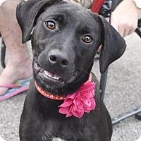Adopt A Pet :: Marie - PORTLAND, ME