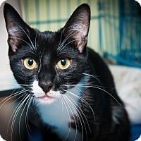 Adopt A Pet :: Nicky - New York, NY