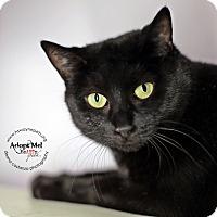 Adopt A Pet :: Isabel - Lyons, NY
