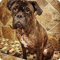 Adopt A Pet :: Hamish - Chambersburg, PA