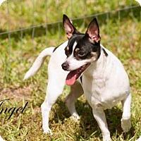 Adopt A Pet :: Angel - Middleburg, FL