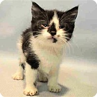 Adopt A Pet :: Mustafa - Hudson, NY