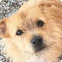 Adopt A Pet :: THOR - Missoula, MT