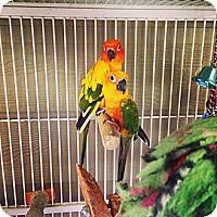 Adopt A Pet :: Sunset and Zo - Burleson, TX