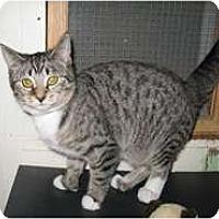 Adopt A Pet :: Dulcy - Shelton, WA