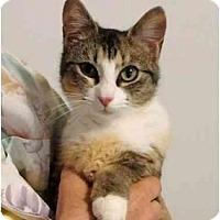 Adopt A Pet :: Diana - Port Republic, MD