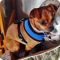 Adopt A Pet :: Pepe - Toronto, ON
