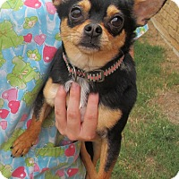 Adopt A Pet :: Alex - Kingwood, TX