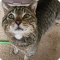 Adopt A Pet :: Leo - Frankfort, IL