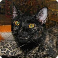 Adopt A Pet :: Mosley - Tulsa, OK
