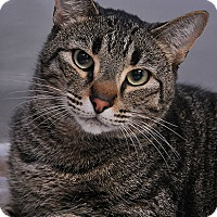 Adopt A Pet :: Crowley-Pending Adoption - Fort Leavenworth, KS
