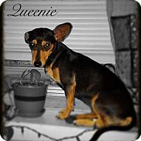 Adopt A Pet :: Queenie - Tampa, FL