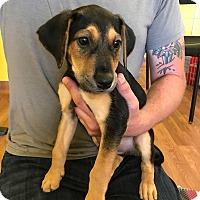 Adopt A Pet :: ERNIE - Albuquerque, NM