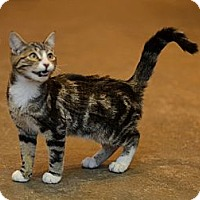 Adopt A Pet :: Sammy - Brooklyn, NY