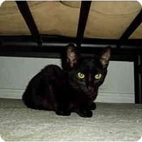 Adopt A Pet :: Isabelle - Little Rock, AR