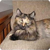 Adopt A Pet :: Suzie - Mesa, AZ