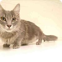 Adopt A Pet :: Mack -Let's Play! - Arlington, VA