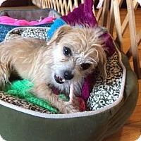 Adopt A Pet :: Serena - Homewood, AL