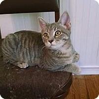 Adopt A Pet :: Gracie - Davison, MI