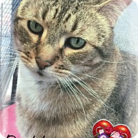 Adopt A Pet :: Buddy - Germantown, OH