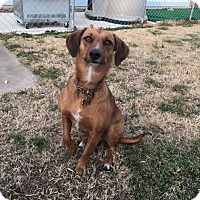 Adopt A Pet :: Peanut - Broken Arrow, OK