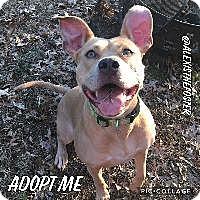 Adopt A Pet :: Alexis - Louisville, KY