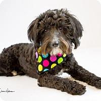 Adopt A Pet :: Tucker - Phelan, CA