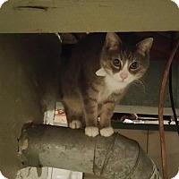 Adopt A Pet :: Rowdy - Minneapolis, MN