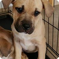 Adopt A Pet :: Mitch - Newcastle, OK