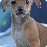 Adopt A Pet :: Sierra - Yuba City, CA
