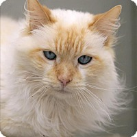 Adopt A Pet :: Blue - Atascadero, CA