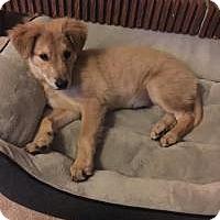 Adopt A Pet :: Rosie - Marlton, NJ
