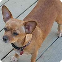 Adopt A Pet :: Nunu - Torrance, CA
