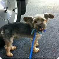 Adopt A Pet :: Timmy - West Palm Beach, FL