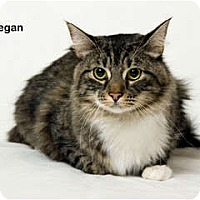 Adopt A Pet :: Finnegan - Portland, OR