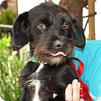 Adopt A Pet :: Minnie - Mission Viejo, CA