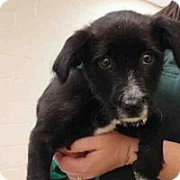 Adopt A Pet :: Cash - Ogden, UT