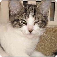 Adopt A Pet :: Carlee - Riverside, RI
