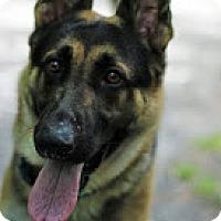 Adopt A Pet :: Max - Tinton Falls, NJ