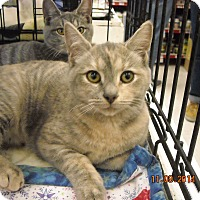 Adopt A Pet :: Daphane - Riverside, RI