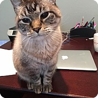 Adopt A Pet :: Max - Spring, TX
