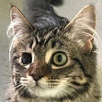 Adopt A Pet :: Willow II - Auburn, CA