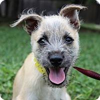 Adopt A Pet :: LILAC - Monroeville, PA