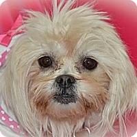 Adopt A Pet :: Chloe - Aurora, CO
